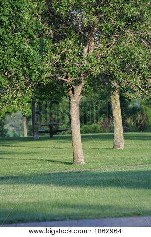 Quiet Corner Of The Park