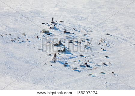Reindeer graze in the tundra around of nomadic yurt next to of polar circle at a cold winter day.