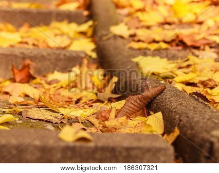 Nature vegetation outdoor concept. Autumnal branches in sun. Golden leaves on branch surrounded by sunlight during fall season.