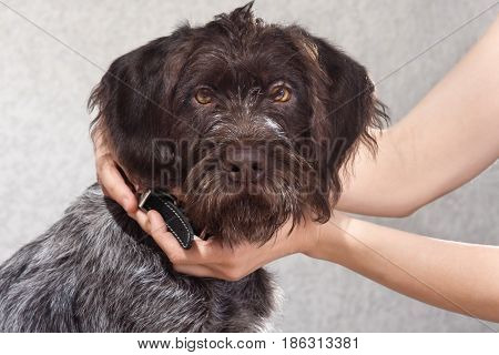 woman hands putting on black collar on the dog