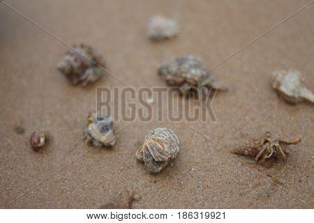 Hermit crab walking along beach on island.