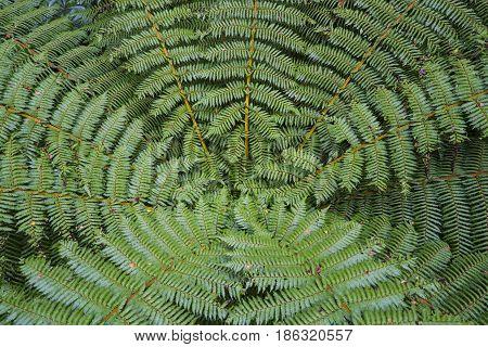 A fern in rain forest, close up