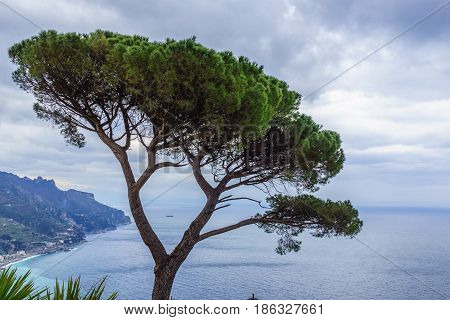 View of green Italian Stone Pine Tree with beautiful blue ocean view Ravello southern Italy.