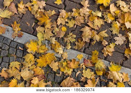 The fallen yellow leaves on the pavement. Background.