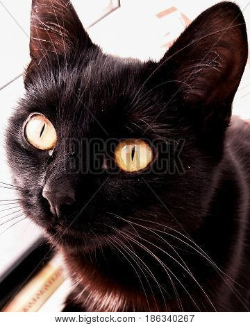 Eyes of a yellow cat. Is not it fascinating?