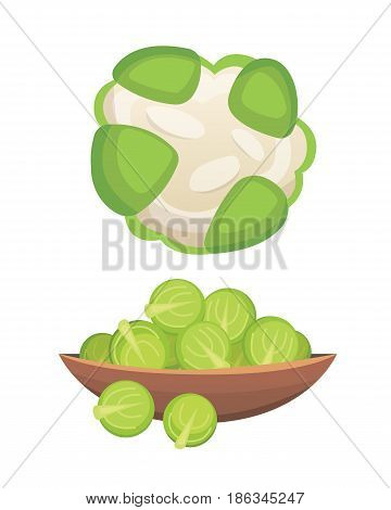 Set vector Cabbage and Lettuce. Vegetable green kohlrabi, other different cabbages