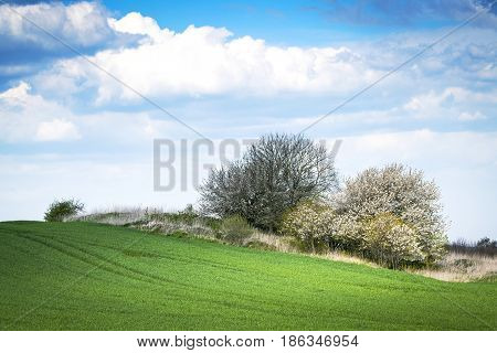 Green meadow in the spring with blooming trees and plants