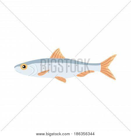 flounder fish vector isolated illustration. Cartoon fresh Flouder flat drawing. isolated