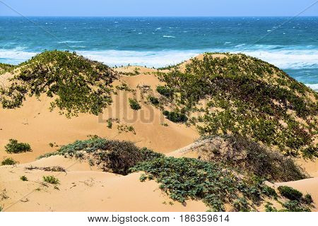Native natural sand dunes with coastal shrubs and the Pacific Ocean beyond taken at the Guadalupe Dunes in the Central Coast, CA