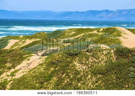 Sand Dunes with coastal chaparral shrubs with the Pacific Ocean beyond taken at the Guadalupe Dunes in the Central Coast, CA