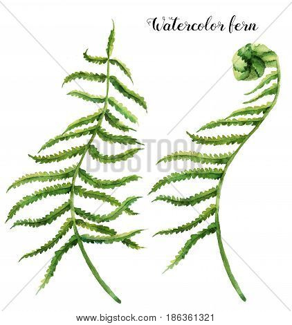 Watercolor set with fern leaves. Hand painted floral illustration with fern branch. Tropic plant isolated on white background. Botanical illustration. For design, print or background.