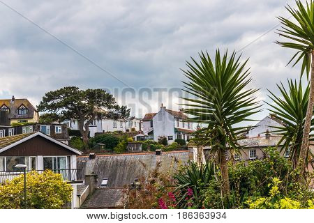 Roofs Of Buildings And Exotic Plants, Seaside Spot Seen From The Bird's Eye View, Beautiful Typical