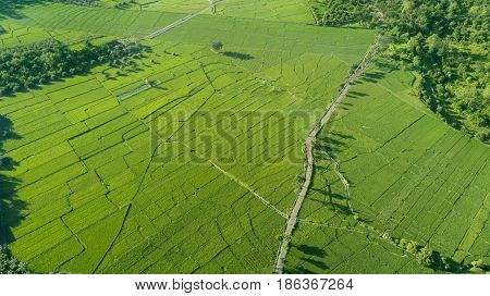 Beautiful aerial view of green paddy field in Majalengka West Java Indonesia
