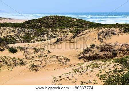 Natural Sand Dunes with coastal shrubs and the Pacific Ocean beyond taken at the Guadalupe Sand Dunes in the Central Coast