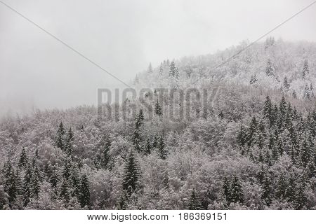 First Snow In Winter Mountain Landscape. Ojdula. Covasna. Romania