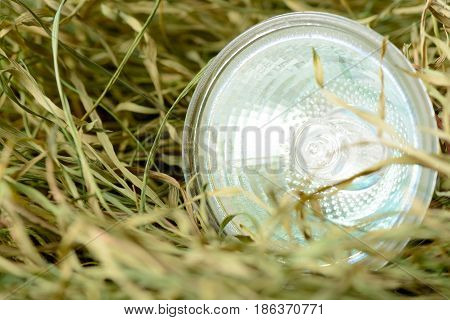 Environmentally Unfriendly Halogen Bulbs On The Dry Grass