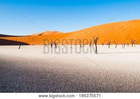 Dead camel thorn trees in Deadvlei dry pan with cracked soil in the middle of Namib Desert red dunes, near Sossusvlei, Namib-Naukluft National Park, Namibia, Africa.