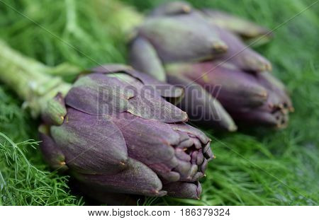 Close view on puple Artichoke flower on the green leafs background