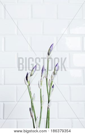 Vertical Framing A Bouquet Of Unblown Flower Iris On A Background Of White Brick Wall