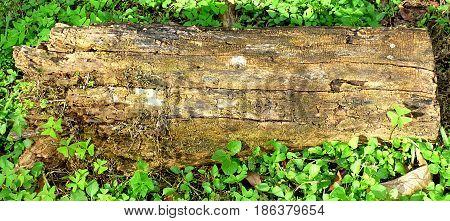 Wooden trunk. Wooden block. Cut off wooden block