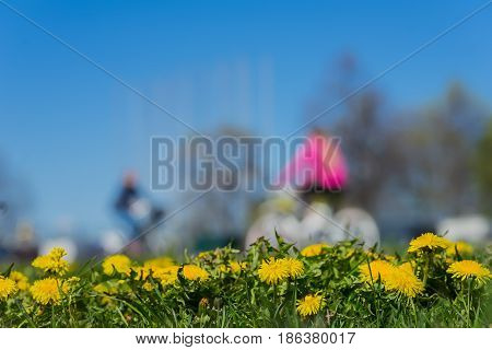 Blurred unrecognizable youth, ride bikes. Spring season, green grass meadow and bright yellow young dandelions, copy space. Abstract Blurred background of people activities in park with bokeh