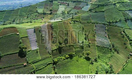 Beautiful aerial view of green farmland with terraced system in Majalengka West Java Indonesia