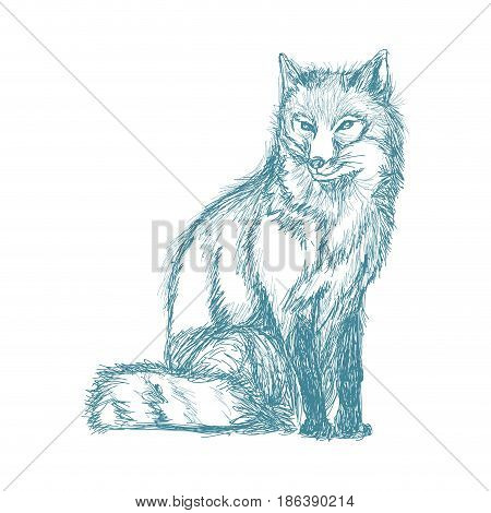 wolf wildlife animal image is hand drawn. pencil blue sketch of wolf vector illustration