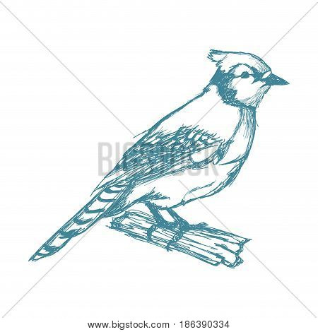 tufted titmouse bird, branch posing for a portrait hand drawn blue vector illustration