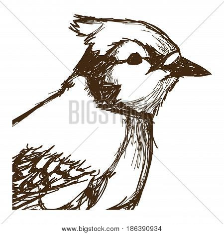 tufted titmouse bird, branch posing for a portrait hand drawn vector illustration
