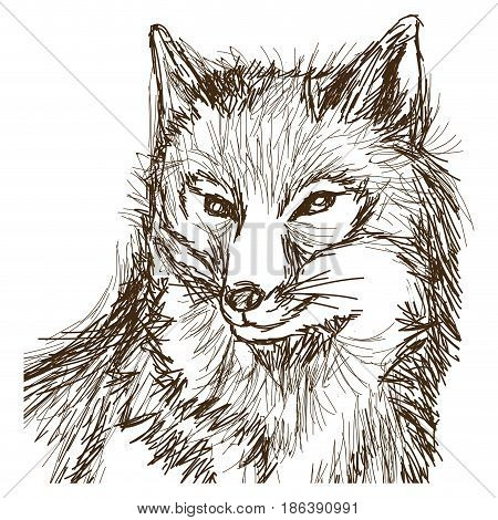 wolf wildlife animal image is hand drawn. portrait pencil sketch of wolf vector illustration