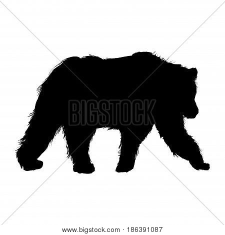 animal wild bear, natural fauna pictogram. vector illustration.