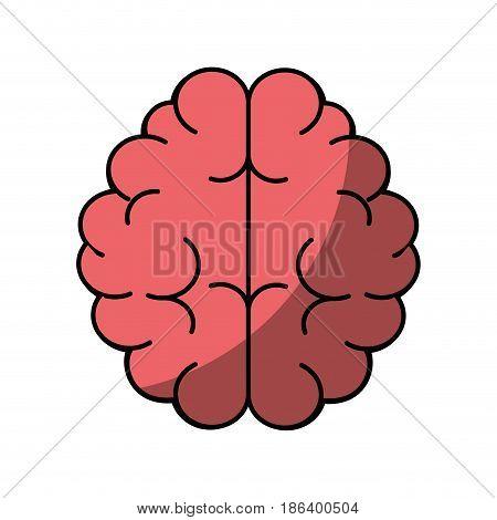 human brain icon over white background. vector illustration