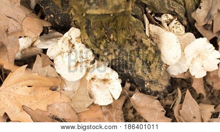 Inedible mushrooms on a stump in the park .