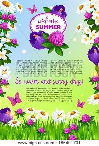 Welcome Summer poster with flowers bouquets. Vector design of summertime clover, crocuses or viola blossoms and floral bunches of blooming daisy and tulip petals on sunny meadow lawn