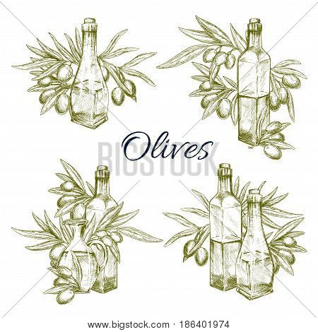 Olive oil bottles and olives branches vector set. Icons of green olives for extra virgin natural organic oil product label templates, cooking and cosmetic or pharmaceutical store or market