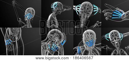 3D Rendering Medical Illustration Of The Metacarpal Bone