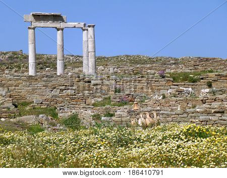 Incredible Remains of the Ancient Greek Temple on Wild Flower Field, Archaeological Site of Delos Island, Greece