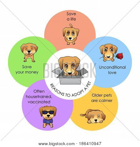 Reasons to adopt a pet infographics, vector illustration