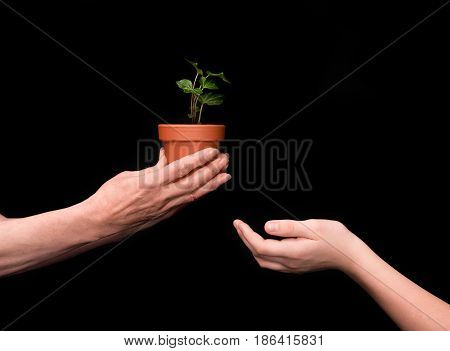 Grandmother And Granddaughter With Green Plant