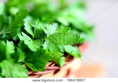 Fresh green parsley leaves photo. Rich source of protective flavonoid antioxidants. Parsley herbs background. Closeup