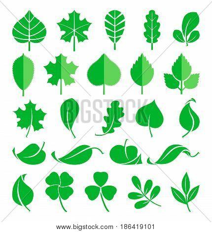 Growing plants. Leaf and grass shoots. Vector illustration in flat style. Nature green spring leaf, natural ecology flora leaf of set