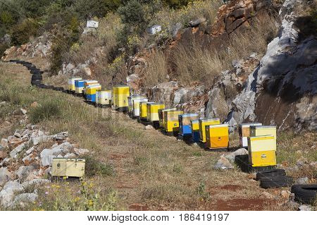 many yellow and blue beehives in the hills of mani on greek peloponnese in spring for collecting honey