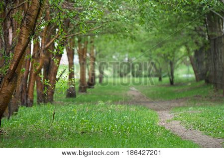 Empty pathway along old green trees saplings in a city park alley on a rainy spring or summer day