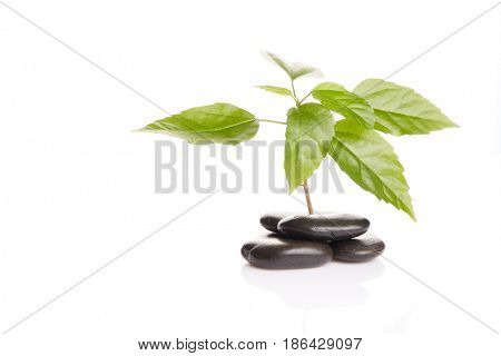 Small green sprout among stones on a white background with copy space. Concept of green peace. Gardening and protection of environment.