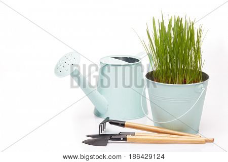 Gardening tools, watering can and bucket with young green oats on a white  background. Concept of spring gardening.