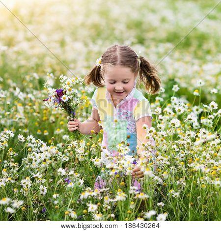 Little Girl Picking Flowers In Daisy Field