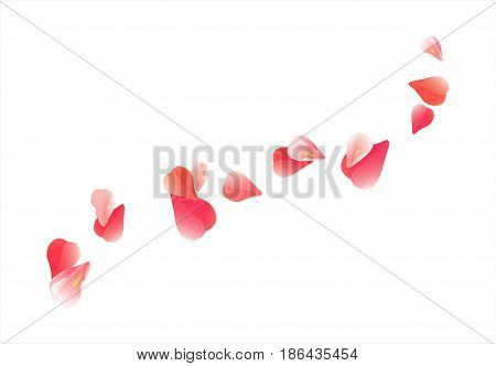 Flowers design. Flowers petals. Sakura flying petals isolated on white background. Pink Red Petals Roses Flowers. Vector