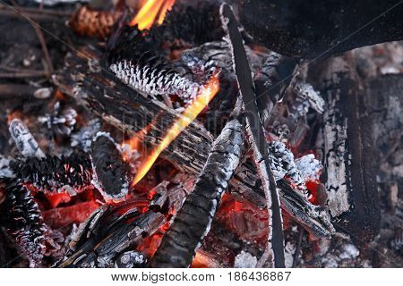 Closeup background of campfire with burning cones
