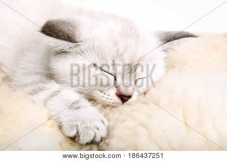 Cute little white kitten sleeps on a soft blanket.