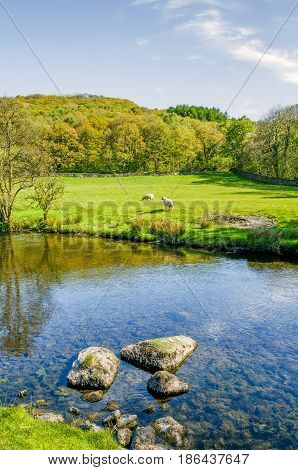 The river Kent near Staveley, Cumbria with woodland in the background.